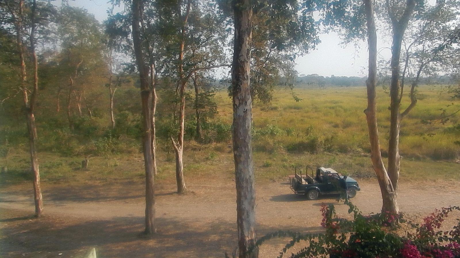Казиранга национальный парк