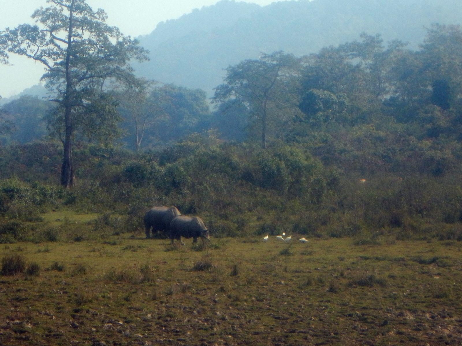 Парк Казиранга носороги