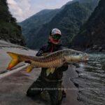 Голд Махсир А. Питерцов рыбалка